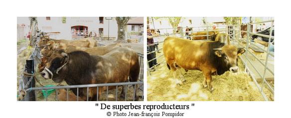AM 88 p4 v1 de superbes reproducteurs