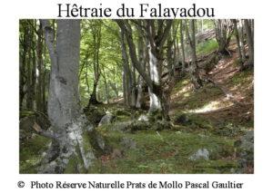 hetraie-du-falayadou-site
