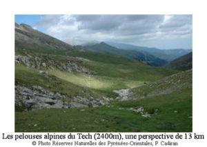 pelouses-alpines-des-sources-du-tech