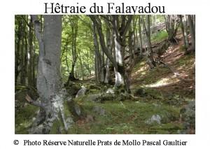 Hêtraie du Falayadou SITE